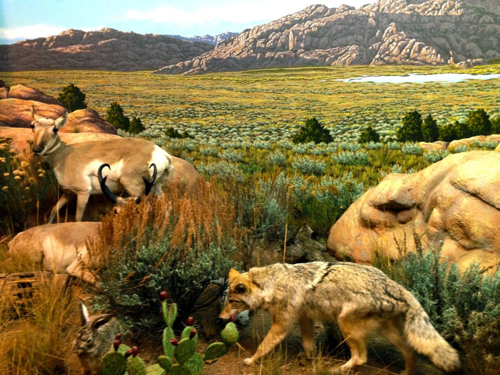 The EMP isn't the only museum I've visited on my travels - check out this Wyoming Plains diorama from the Wyoming State Museum